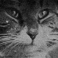 Cat from old magazine print / SeacoastNH.com