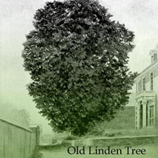 Tree_old_Linden_Beatrice_Pearson2