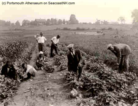 Black workers at Langdon Farm in Portsmouth, NH ? POrtsmouth Athenaeum